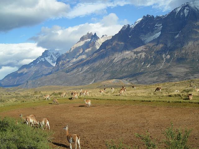 Chilijskie stworzenia